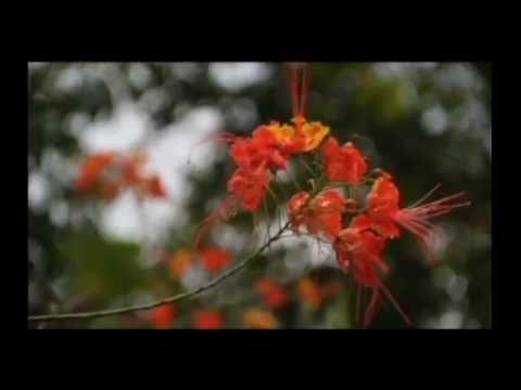 Shame añanatero shipana (Vamos a mirarle a la planta)