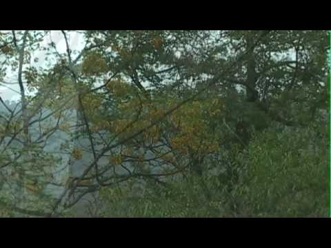 Bosque Seco